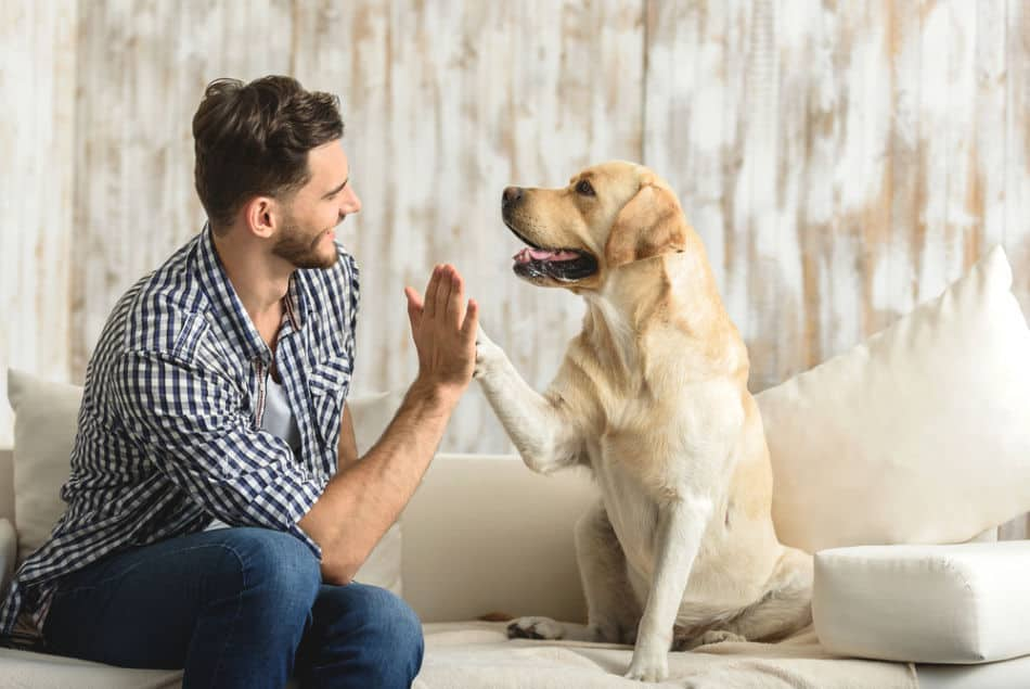 Photo of dog with human interaction