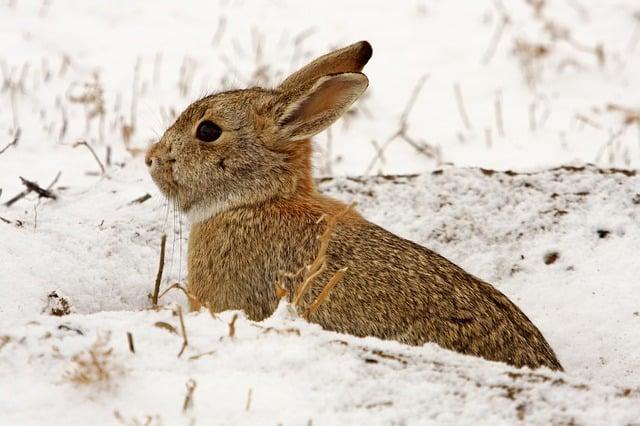 Photo of rabbit in snow