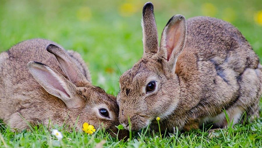 Photo of rabbits