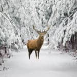 20 Clever Ways That Deer Survive Winter