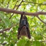 Are Bats in Alaska?