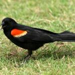 10 Most Common Birds Of North America