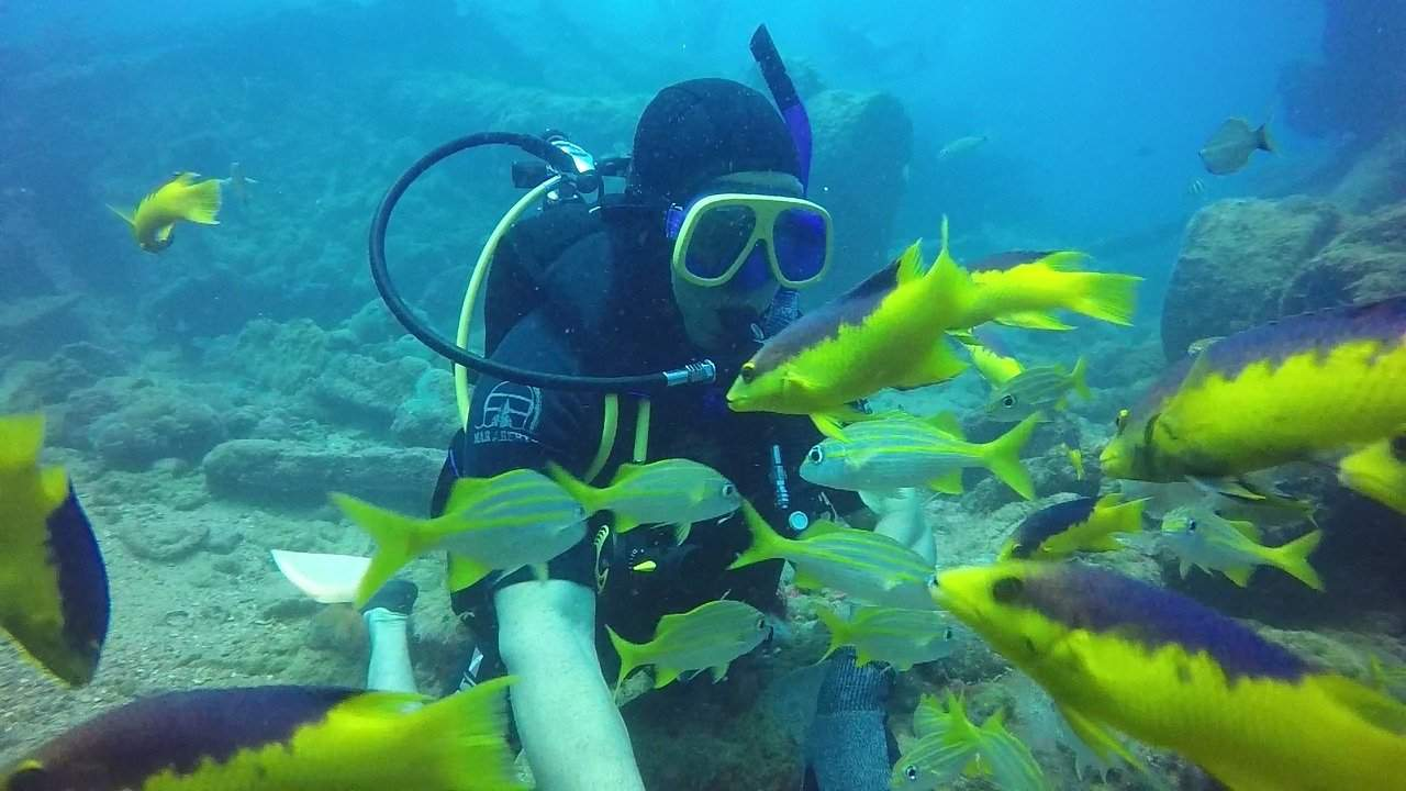 Shipwreck dive wildlife