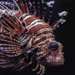 How Do Fish Defend Themselves?