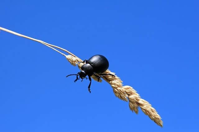 Insect on crops